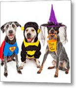 Cute Dogs Wearing Halloween Costumes Metal Print