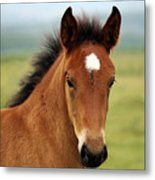 Cute Foal Metal Print