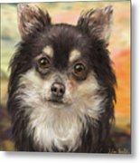 Cute Furry Brown And White Chihuahua On Orange Background Metal Print
