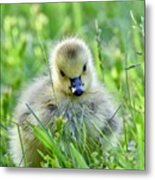 Cute Goose Chick Metal Print