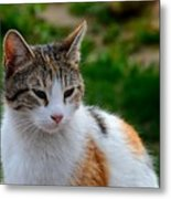 Cute Grey White And Orange Cat Poses And Gazes Metal Print