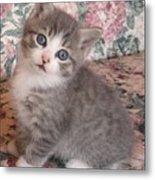 Cute Kitty Metal Print