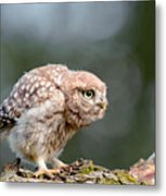 Cute Little Owlet Metal Print