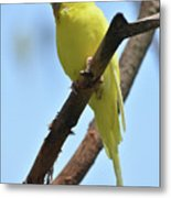 Cute Little Parakeet Resting On A Branch Metal Print