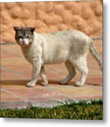 Cute Mexican Kitty Metal Print
