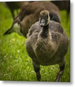 Cute On The Move Metal Print