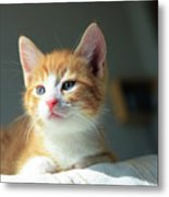 Cute Orange Kitten With Large Paws In Sunny Day Metal Print
