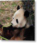 Cute Panda Bear Eating A Green Shoot Of Bamboo Metal Print