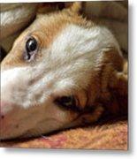 Cute Puppy Cuddles Metal Print