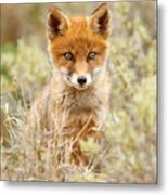 Cute Red Fox Kit Metal Print