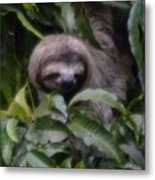 Cute Sloth Face Metal Print