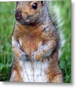 Cute Squirrel In The Park  Metal Print