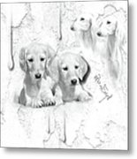 Cute White Salukis With Puppies Metal Print