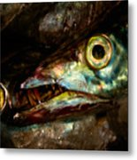 Cutlassfish Eyes Metal Print