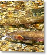 Cutthroat Trout In Clear Mountain Stream Metal Print