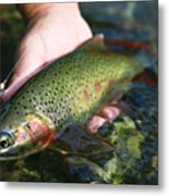 Cutthroat Trout On The Middle Fork Metal Print