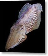 Cuttlefish At Night Metal Print