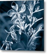 Cyanotype Morn Metal Print