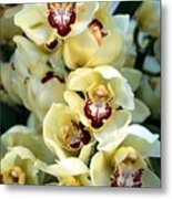 Cybidium Orchids Metal Print