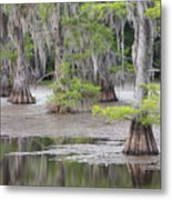 Cypress And Spanish Moss Of Caddo Lake State Park 4 Metal Print