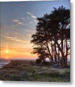 Cypress At Sunset Metal Print