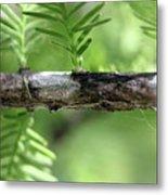 Cypress  Branch Metal Print