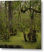 Cypress Forest Metal Print