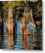 Cypress Grove One Metal Print