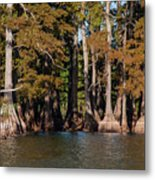 Cypress Grove Five Metal Print