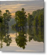 Cypress In Lake Reflection Metal Print