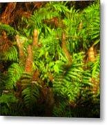 Cypress Knees In Ferns Metal Print