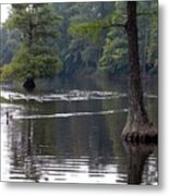 Cypress Lake Metal Print