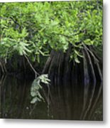 Cypress Leaves And Fluted Trunks Metal Print