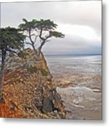 Cypress Tree At Pebble Beach Metal Print