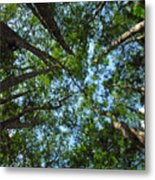 Cypress Tree Canopy Metal Print