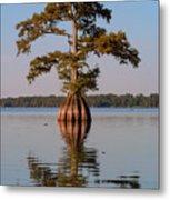Cypress Tree On Reelfoot Lake Metal Print