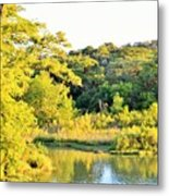 Cypress Trees Along The Guadalupe Metal Print