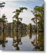 Cypress Trees And Spanish Moss In Lake Martin Metal Print