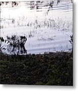 Cypress Trees And Water2 Metal Print