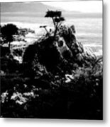 Cypress Trees Metal Print