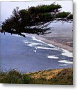 Cypress View Metal Print
