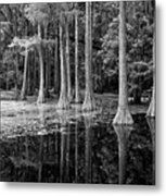 Cypresses In Tallahassee Black And White Metal Print