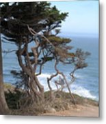 Cypress On The Cliff 15 Metal Print