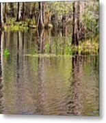 Cypresses Reflection Metal Print