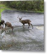 D-a0033 Mule Deer Metal Print