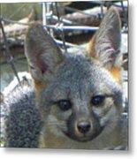 D-a0068 Gray Fox Pup Metal Print
