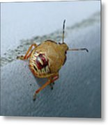 D2b6336-dc Colorful Insect On Sonoma Mountain Metal Print