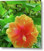 D9m-23 Orange Flower Metal Print