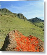 Da5872 Lichen Covered Rock Below Abert Rim Metal Print