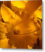 Daffodiil Flowers Evening Glow 9 Contemporary Modern Art Print Giclee Metal Print